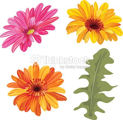 Set Of Gerbera Daisy Orange Red Yellow Flowers And Green Leaves On White Background Digital Draw Botanical Illustration In Watercolor Style For Design