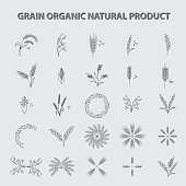 set of grain organic natural product. concept vector illustration