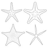 Set of graphic black and white images of sea stars. Isolated vector objects on white background.