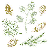 Set of green fir and pine branches and gold pine cones.