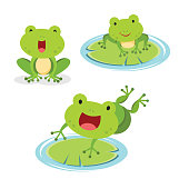 Vector illustration of set of green frog in different pose.