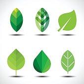 Set of green leaves design elements. Vector illustration.