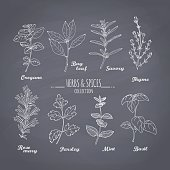 Set of hand drawn spicy herbs on chalkboard background. Chalk style condiments for your design. Vector illustration