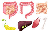 A Set of Human organ illustration
