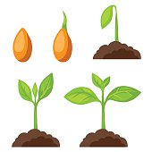 Set of illustrations with phases plant growth. Image for banners, web sites, designs.