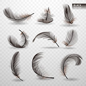 Set of isolated falling black y twirled feathers on transparent background in realistic style vector illustration
