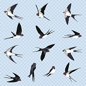 Simple Swallows on a light blue transparent background. Thirteen flying swallows in cartoon style. Flying birds in different views. Design elements.