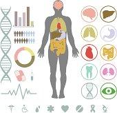 Presentation set. Human body with internal organs plus buttons. Diagram (graph), cardio gram.