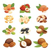 Set of nuts vector illustration. Vegetarian nutrition pistachio ingredient healthy organic food. Agriculture diet nutshell seed snack collection.
