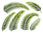 Set of palm leafs and branches, isolated on white. EPS 10 contains transparency.