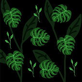 Set of palm leaves silhouettes isolated on on a black background.