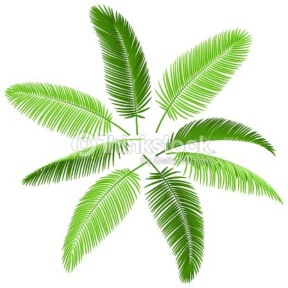 Ensemble de feuilles de palmier clipart vectoriel thinkstock - Set de table feuille de palmier ...