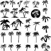 Set of palm tree illustrations. Design element for  label, emblem, sign, poster, card, banner. Vector image