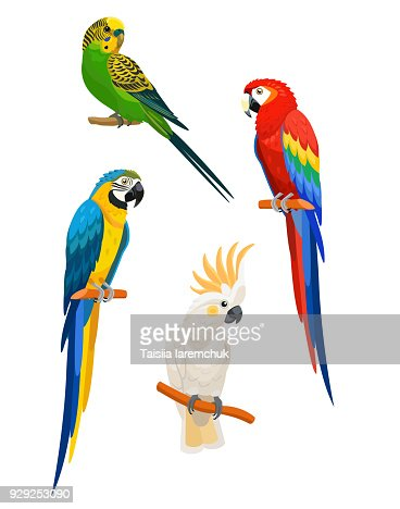 Set of parrots isolated on white background. Vector illustration. : stock vector