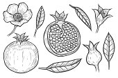 Set of Pomegranate fruit, berry and flowers leaves. Engraved hand drawn vintage retro vector Organic nutrition healthy food. Pomegranate engraving sketch etch illustration. Isolated on white
