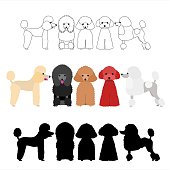 set of poodle group.