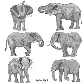 A set of realistic african elephants. Isolated, each object is located on a separate layer, no background