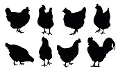 Set of realistic vector silhouettes of hens, chickens and cock isolated on white background