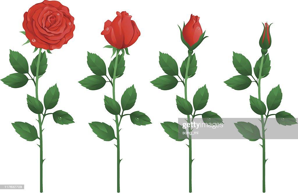 Рисованный цветок с бутоном