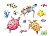 Set of sea turtles, marine fish and algae painted in watercolor, isolated on white background. Hand-drawn vector illustration.