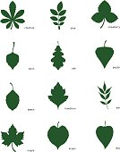 Stock vector illustration set of silhouettes of leaves of different trees