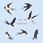 Simple Swallows on a light blue background. Five flying and two sitting swallows in cartoon style. Flying birds in different views. Red plumage around the beak, Dark blue wings. Design elements.