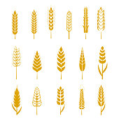 Set of simple wheat ears icons and design elements for beer, organic local farm fresh food, bakery themed design, wheat grain. Wheat vector eps 10