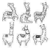 Set of six pretty hand drawn lamas, vector illustration