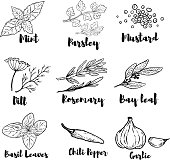 Set of spice and herbs illustrations isolated on white background. Design elements for poster, menu. Vector illustration