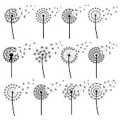 Set of black dandelions blowing isolated on white background. Stylized summer or spring flowers with flying fluff. Floral design elements, icons. Vector illustration