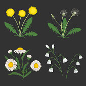 Set of summer flowers on a dark gray background.There are chamomiles, dandelions and bellflowers in the picture. Elements can be used in design projects. Vector illustration