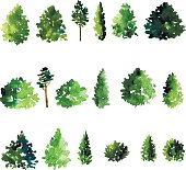 set of trees drawing by watercolor, conifer and decidious trees, green foliage, hand drawn vector illustration