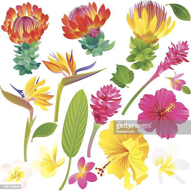 Satz von tropischen Blumen