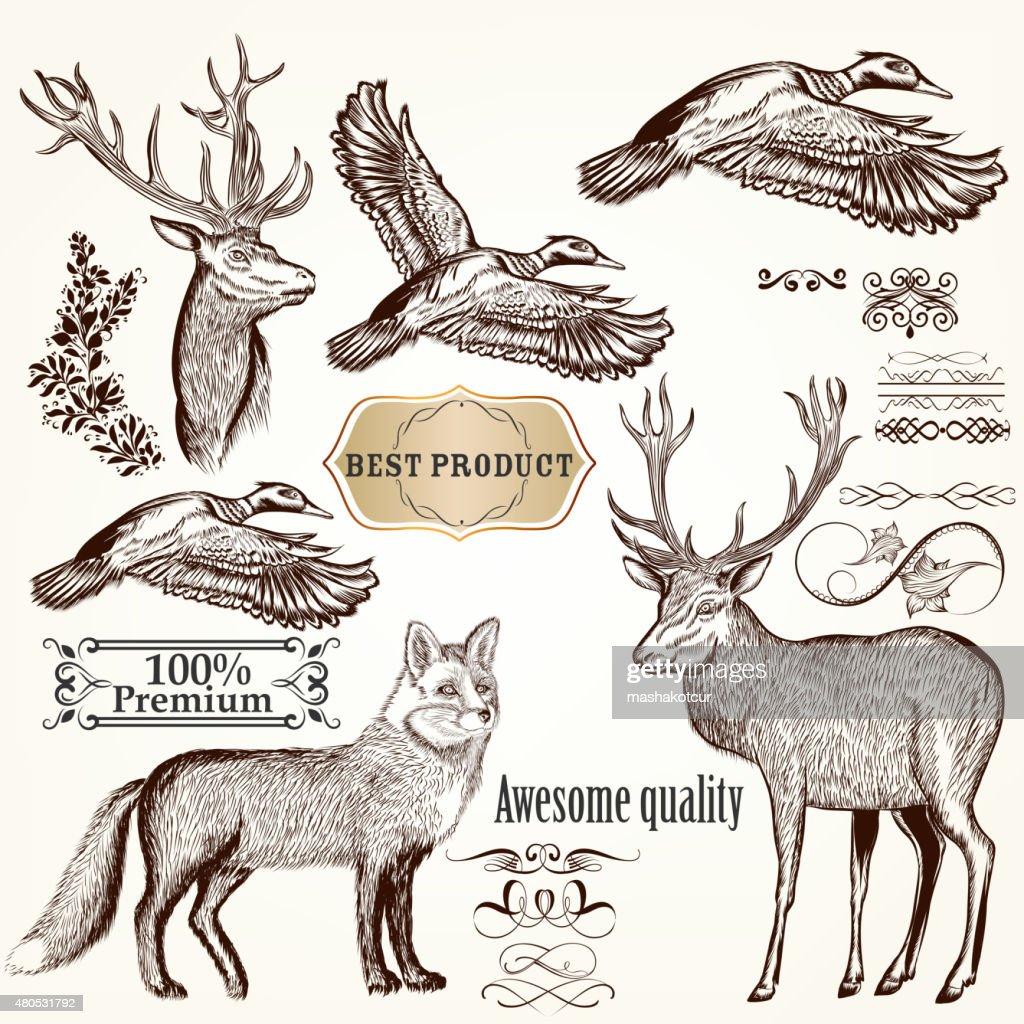Set of vector detailed animals for design : Vectorkunst