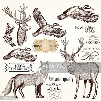 Set of vector detailed animals for design : Vector Art