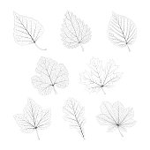 Set of vector isolated monochrome single leaves