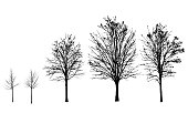 Set of vector silhouettes of trees without leaves in autumn and winter, isolated on white background
