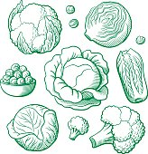 Set of stylized outline vector vegetables. Cabbage, cauliflower, broccoli, chinese cabbage, brussels sprouts