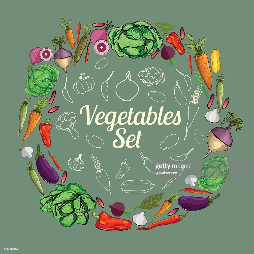 Set of vegetables. Vector illustration. : Arte vectorial