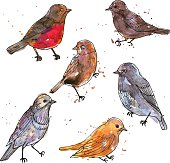 set of watercolor drawing birds with paint stains at white background, hand drawn vector illustration