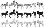 Set of zebra on a white background vector Illustration
