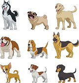 Vector illustration, set of funny purebred dogs, on a white background
