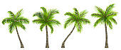 Illustration Set Realistic Palm Trees Isolated on White Background - Vector