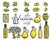 Set vector hand drawn olives, tree branches, glass bottle, jug , metal dispenser and olive oil. Illustration outline in retro sketch style.