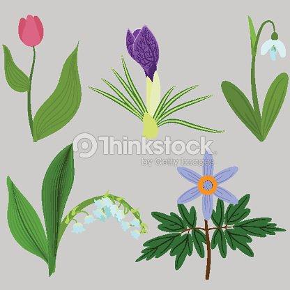 Set spring flowers. Tulips, crocuses, snowdrops, lilies, anemones