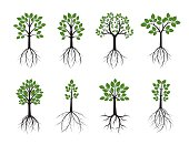 Set of Trees. Roots and green Leafs. Vector Illustration.