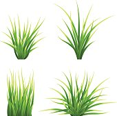 Set realistic vector  grass. Bush of fresh grass of various shapes. Isolated element for design, nature landscape illustration.