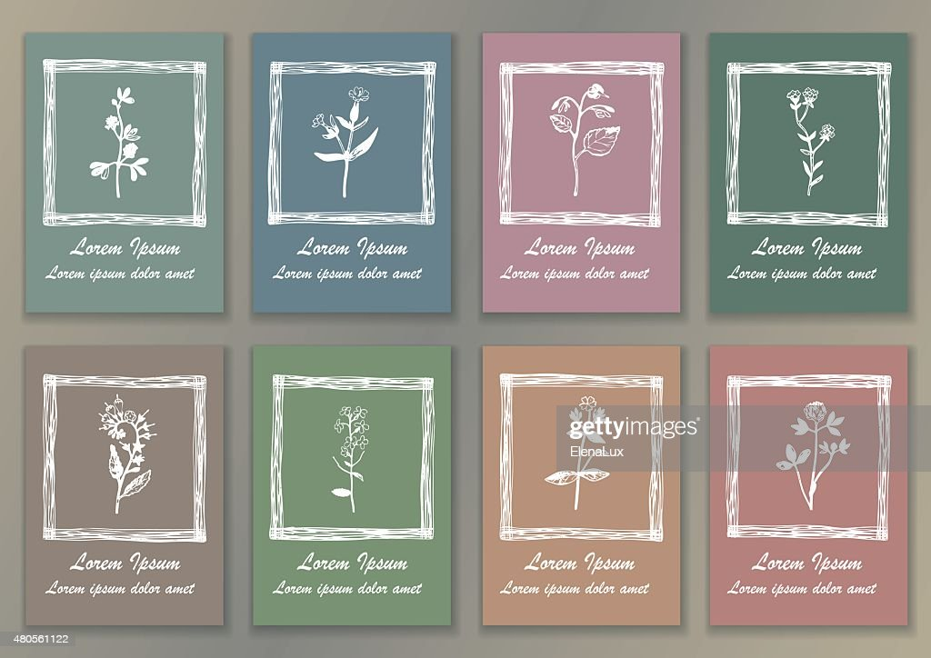 Set Vintage Posters with hand drawn ink herbs : Vector Art