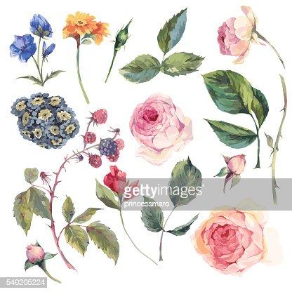 Impostato di elementi vettoriali vintage rose inglese : Arte vettoriale