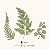 Set with ferns. Plants with leaves isolated on white background. Vector design elements. Engraving style. Botanical illustration.